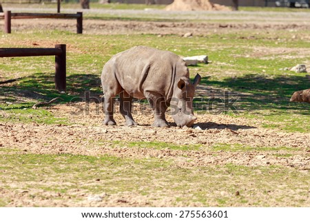 Child of rhinoceros on the ground - stock photo