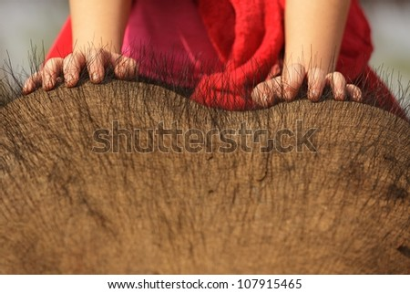 child on asian elephant head, focus on hands - stock photo