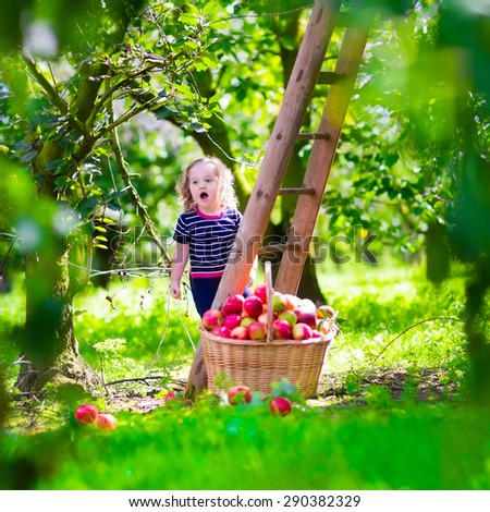 Child picking apples on a farm climbing a ladder. Little girl playing in apple tree orchard. Kids pick organic fruit in a basket. Kid eating healthy fruits at fall harvest. Outdoor fun for children.  - stock photo