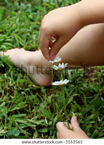 Child picking daisy pedals - stock photo