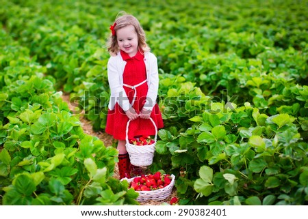 Child picking strawberries. Kids pick fresh fruit on organic strawberry farm. Children gardening and harvesting. Toddler kid eating ripe healthy berry. Outdoor family summer fun in the country. - stock photo