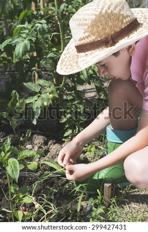 Child planting plans in a garden. Sunlight - stock photo