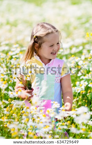 Child playing in daisy field. Girl picking fresh flowers in daisies meadow on sunny summer day. Kids play outdoors. Children explore nature. Little girl with flower bouquet for mother day or birthday.