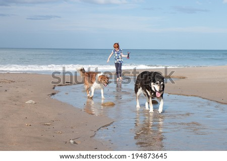 child playing with her dogs in a creek at the beach  - stock photo