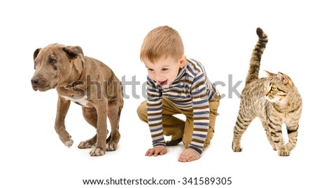 Child, puppy pit bull and cat playing together, isolated on white background - stock photo