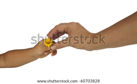 child's hand giving mother's hand a flower isolated on a white background