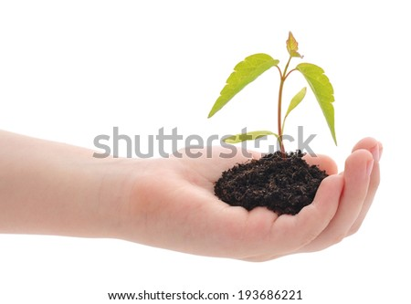 child's hand holding green plant isolated on white - stock photo