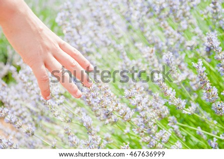 Child's hand touching lavender flowers