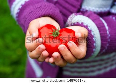 Child's hands holding a heart shaped tomato.  - stock photo