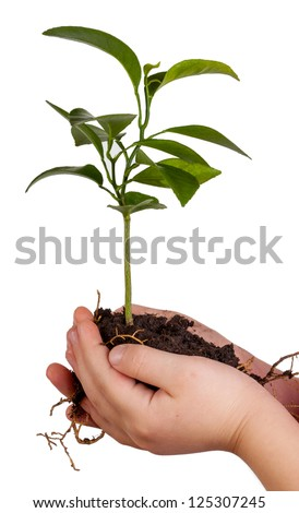 Child's hands holding green plant in soil isolated on white background - stock photo