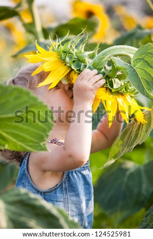 Child smelling sunflower in spring field - stock photo