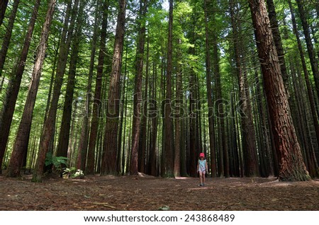 Child travel outdoors in Redwoods Rotorua, New Zealand. - stock photo