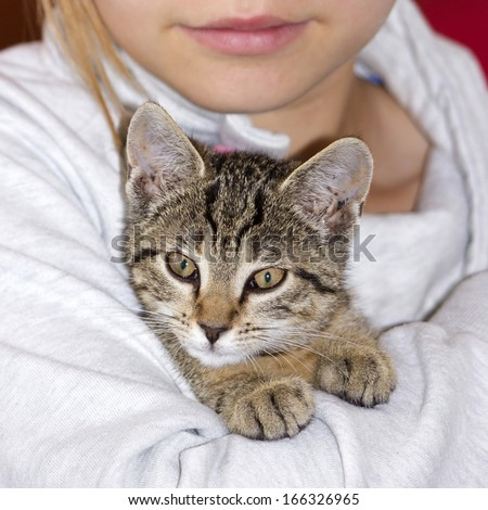 child with kitten - stock photo
