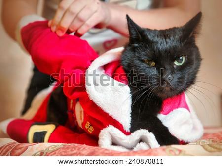 children dress their black cat in santa costume - stock photo