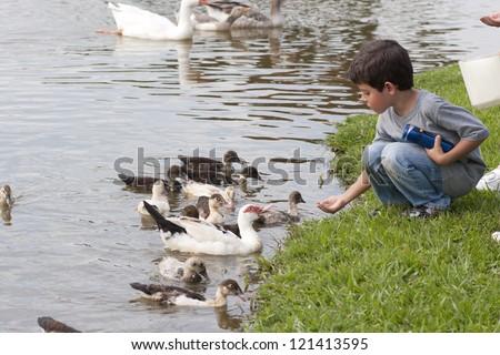 Children Feeding Ducks At The Farm - stock photo