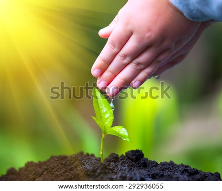 Children hand watering young tree over green background. Macro i - stock photo