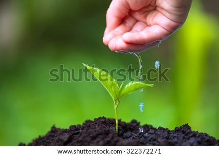 Children hand watering young tree over green background. Macro i