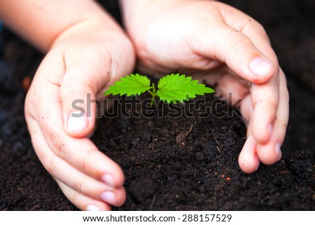 Children hands around green young plant. - stock photo