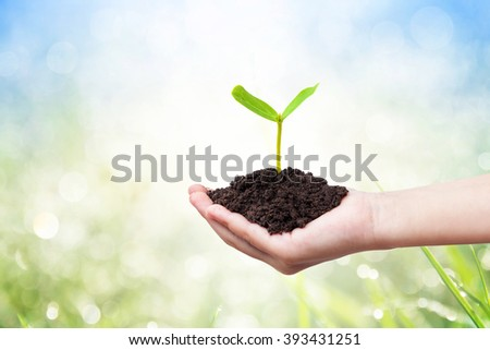 Children hands holding a green young plant