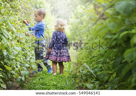 Children picking berries in a beautiful garden