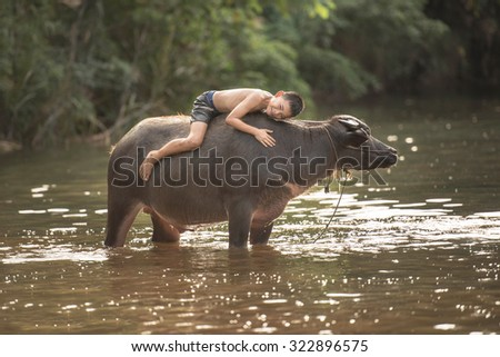 Children played with Buffalo