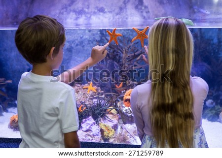 Children pointing at starfish in tank at aquarium