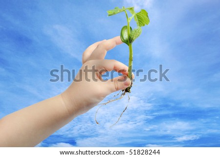 Children's hand holding small plant growing from soil - stock photo