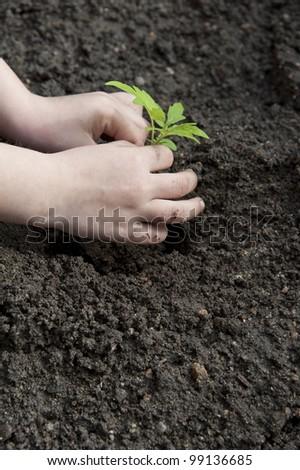 children's hands and little plant - gardening - stock photo