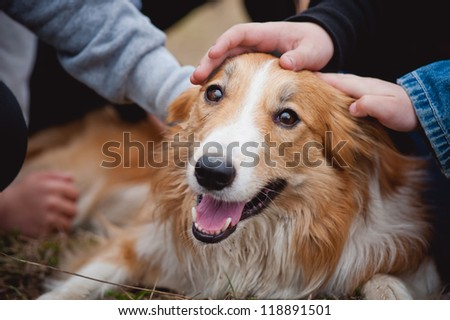 children's hands caress red border collie dog - stock photo