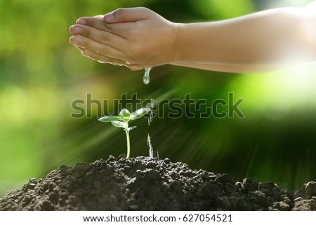 Children's hands watering a young plant in the morning light