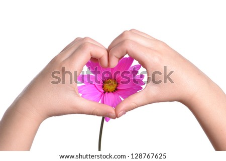 childs hands making heart shape and pink flower - stock photo