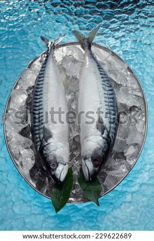 Chilled mackerel fish on ice - stock photo