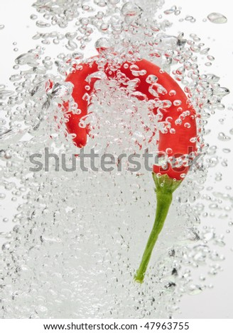 Chilli pepper falling in water on white with air bubbles - stock photo