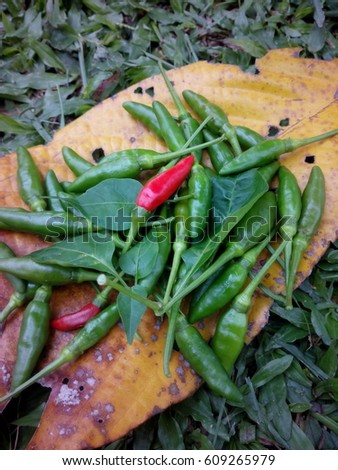 Chilly peppers on the dry leaves