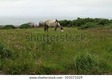 Chiloe Chile - White horse