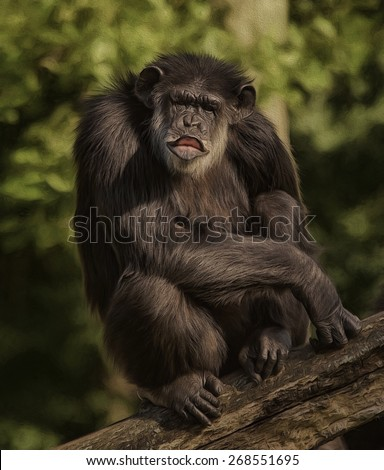 Chimpanzee Blowing a Kiss - stock photo
