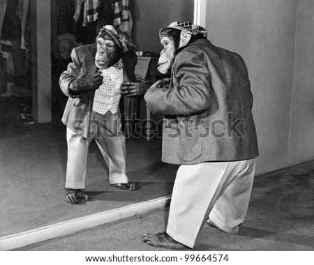 Chimpanzee in a jacket and trousers in front of a mirror