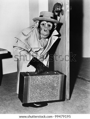 Chimpanzee in coat and hat walking with a suitcase