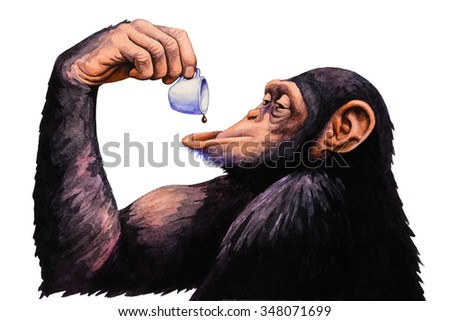 Chimpanzees drink a cup of coffee. Watercolor illustration. - stock photo