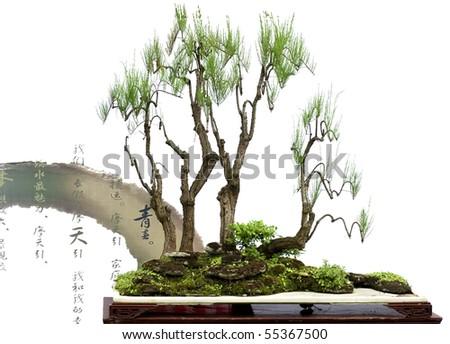 china bonsai with chinese verse - stock photo
