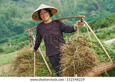 Chinese asian woman worker at farm work carrying green rice grass or weed in agriculture field - stock photo