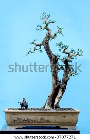 chinese Bonsai