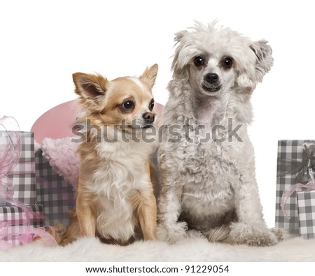 Chinese Crested Dog Years