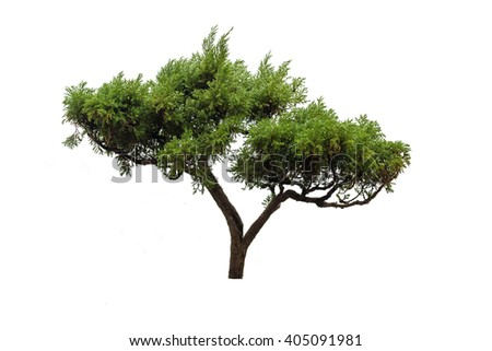 Chinese green bonsai tree isolate on white background   - stock photo