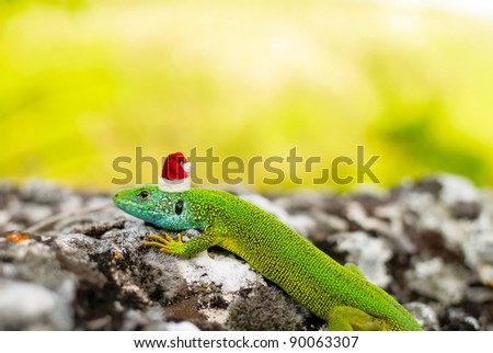Chinese horoscope sign the little dragon, lizard in the Santa's cap - stock photo
