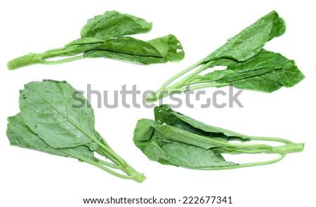 Chinese kale vegetable on white background - stock photo