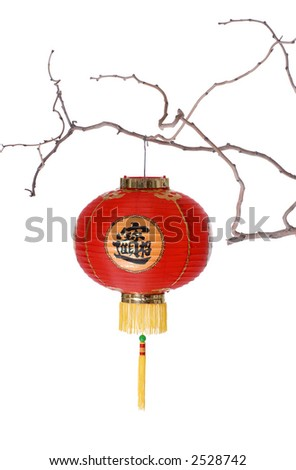 Chinese Lantern on Bare Branch - stock photo