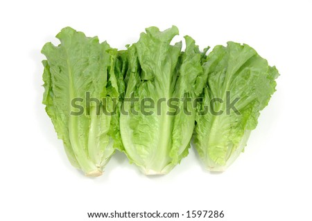 Chinese lettuce in isolated white background