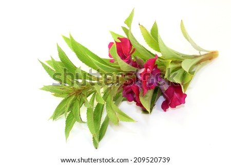 Chinese medicinal herb on a white background - stock photo