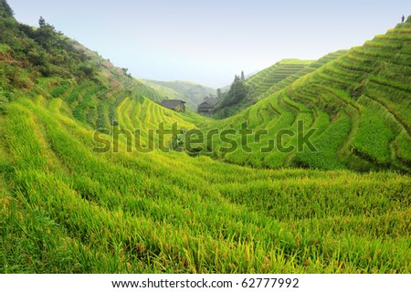 Chinese rice terraces in autumn (Guangxi province, China) - stock photo